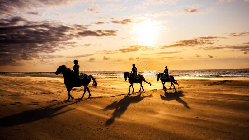 Άνθρωποι ιππεύουν άλογα στην παραλία στοκ εικόνα