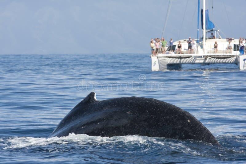 Άνθρωποι που προσέχουν μια φάλαινα από τη βάρκα καταμαράν στο υπόβαθρο στοκ εικόνα