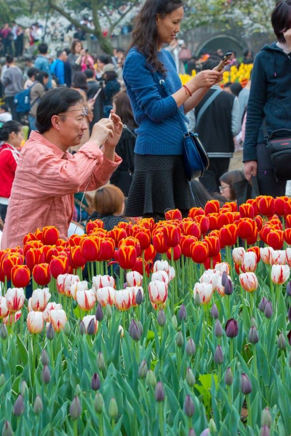 Άνθρωποι που προσέχουν τις τουλίπες σε Hangzhou στοκ φωτογραφία