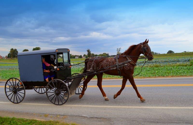 Άνθρωποι Amish στο άλογο και με λάθη στοκ φωτογραφίες με δικαίωμα ελεύθερης χρήσης