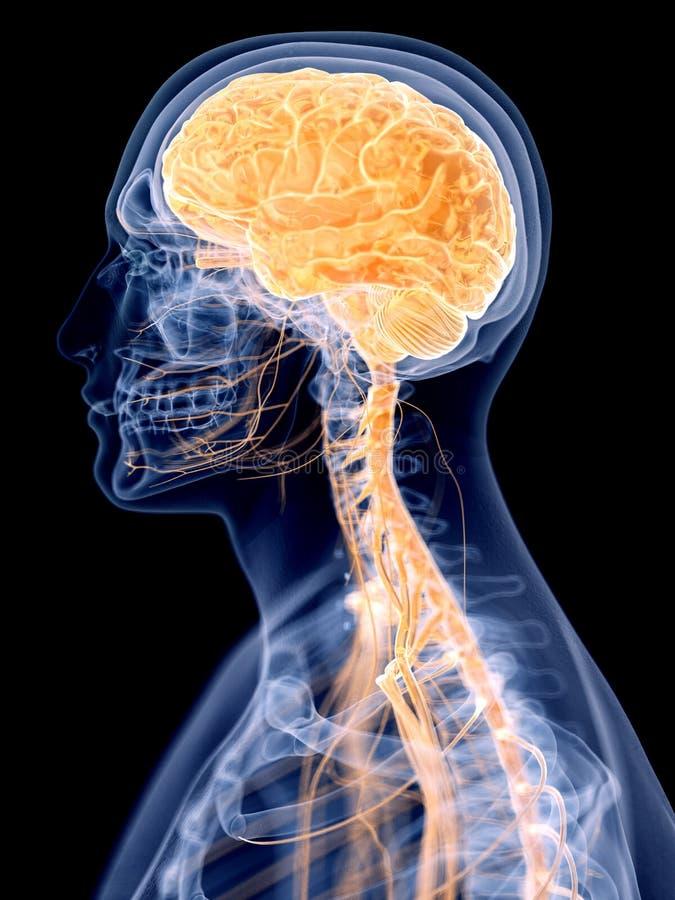 άνθρωπος εγκεφάλου διανυσματική απεικόνιση