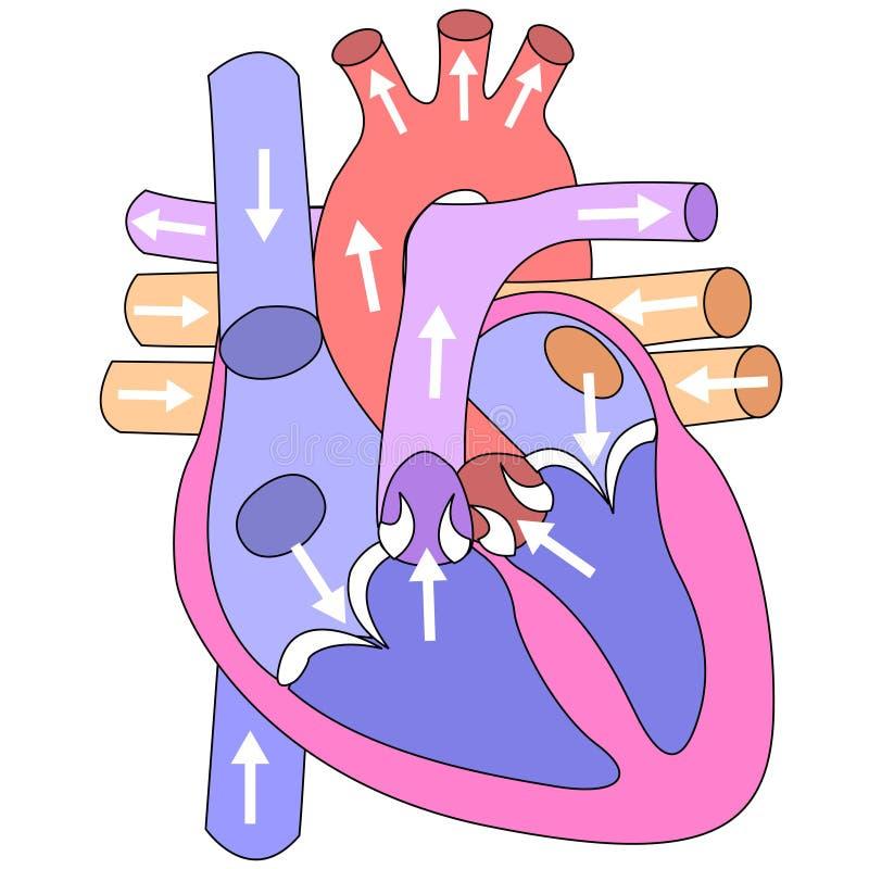 άνθρωπος καρδιών απεικόνιση αποθεμάτων