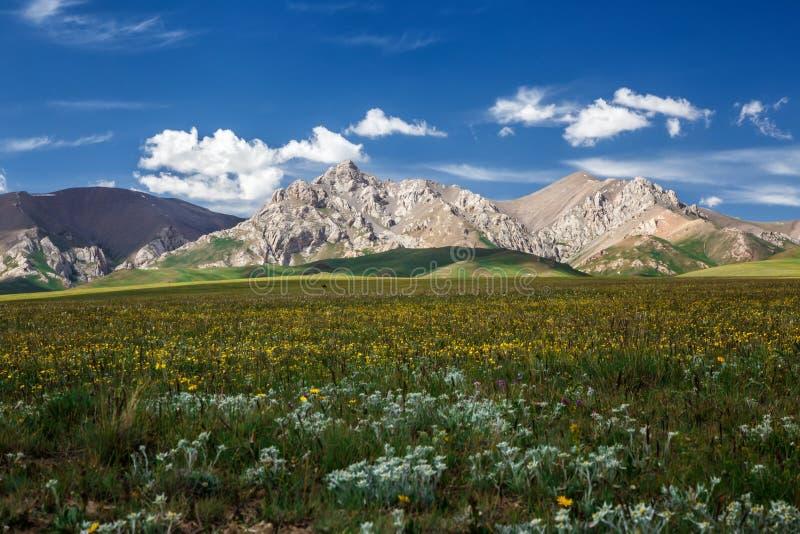 Άνοδος αιχμών βουνών μεταξύ των ανθίζοντας τομέων Παραδοσιακά θερινά λιβάδια Κιργιστάν στοκ εικόνα
