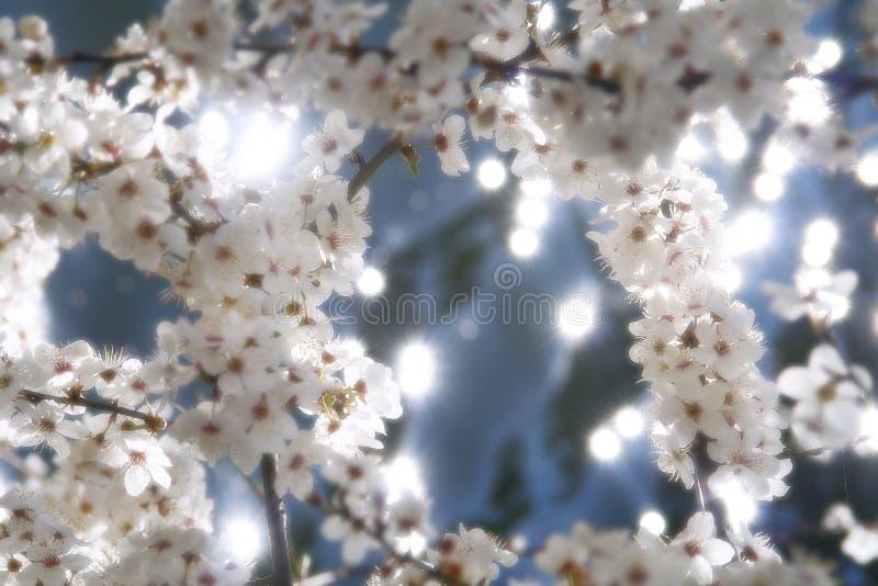 Download άνοιξη άνθισης στοκ εικόνα. εικόνα από άνοιξη, άσπρος - 2232187