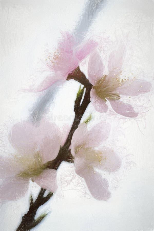 Άνοιξη ανθίζοντας όμορφο άνθος ροδάκινων κρητιδογραφιών ρόδινο στοκ εικόνα με δικαίωμα ελεύθερης χρήσης