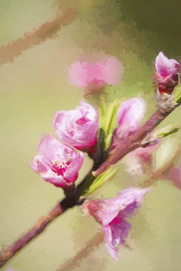 Άνοιξη ανθίζοντας όμορφο άνθος ροδάκινων κρητιδογραφιών ρόδινο στοκ φωτογραφίες