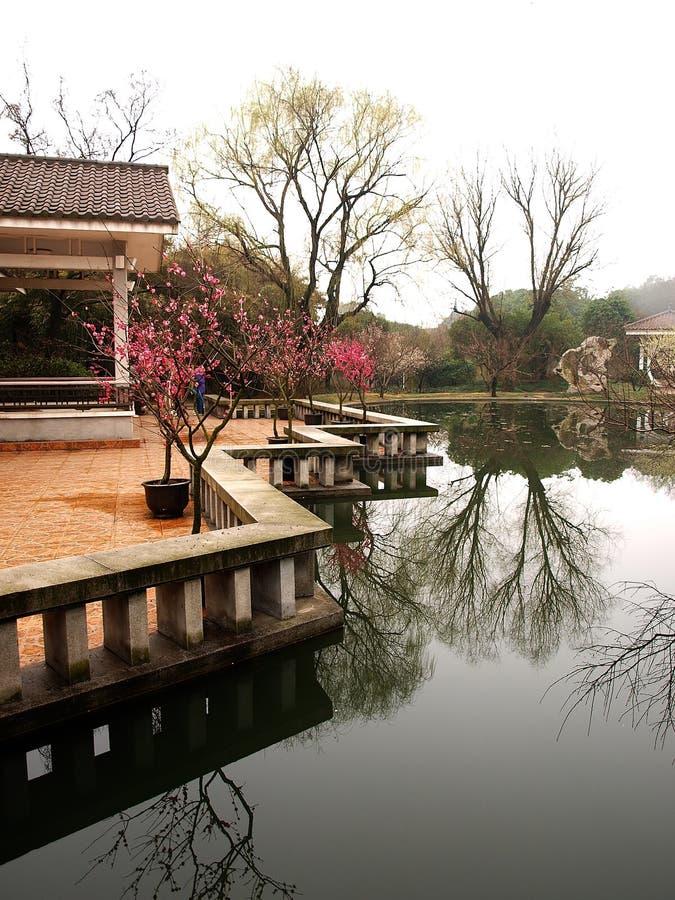 Download άνοιξη κήπων στοκ εικόνα. εικόνα από τουλίπες, πηγή, πέτρα - 13185019