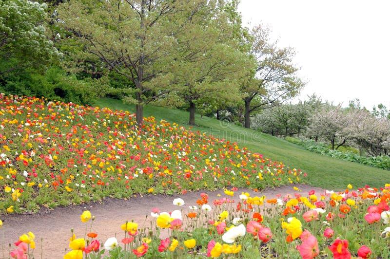 άνοιξη κήπων στοκ εικόνα