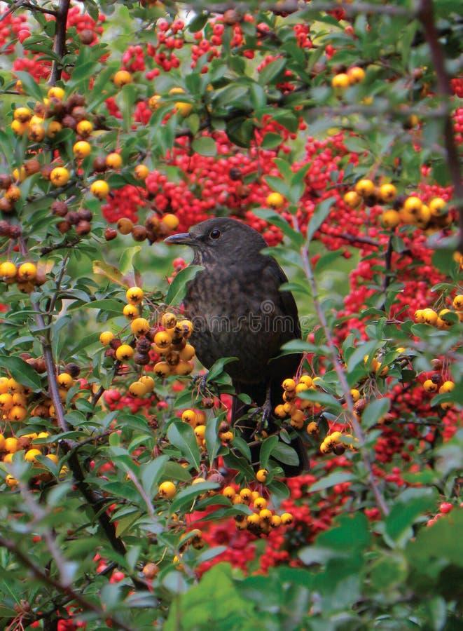 Άνοιξη και μούρα και ένα πουλί στοκ φωτογραφία με δικαίωμα ελεύθερης χρήσης