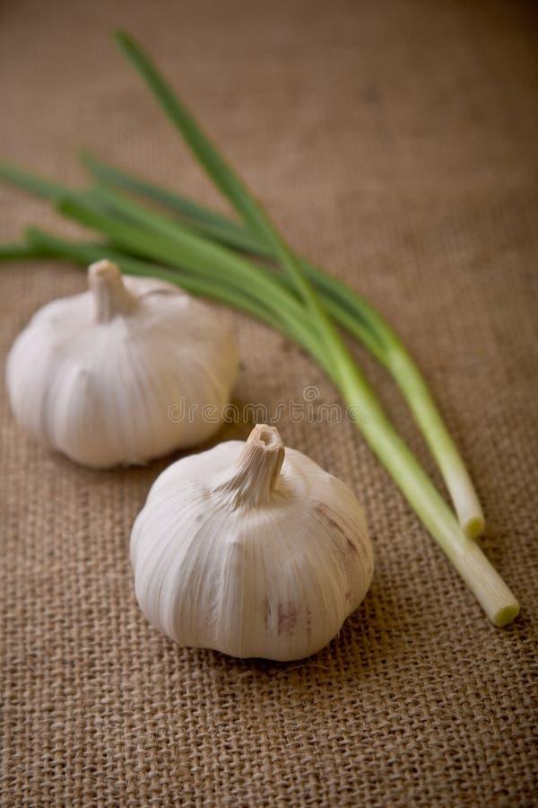 άνοιξη κρεμμυδιών σκόρδου στοκ φωτογραφία με δικαίωμα ελεύθερης χρήσης