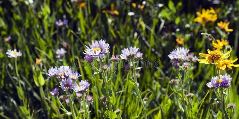 άνοιξη λιβαδιών wildflower στοκ εικόνες με δικαίωμα ελεύθερης χρήσης