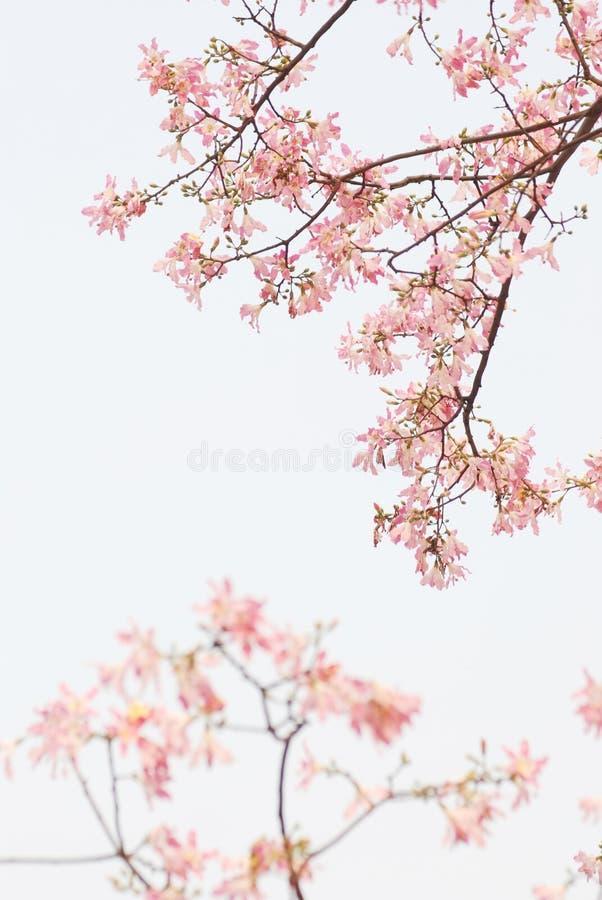 άνοιξη λουλουδιών ανασ&kap στοκ εικόνα με δικαίωμα ελεύθερης χρήσης