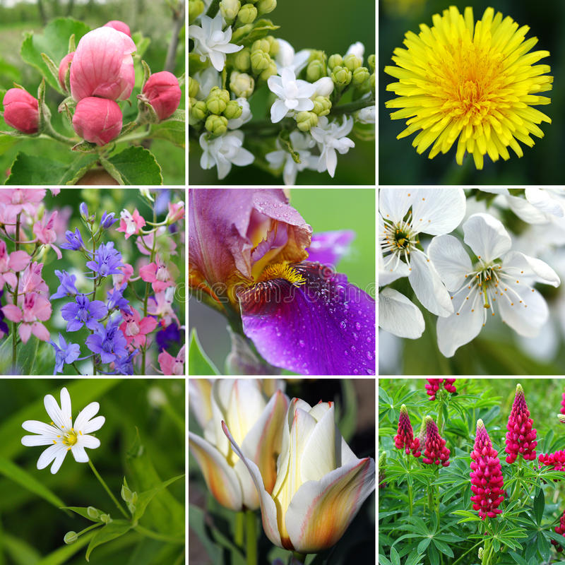 άνοιξη λουλουδιών κολάζ στοκ φωτογραφία με δικαίωμα ελεύθερης χρήσης