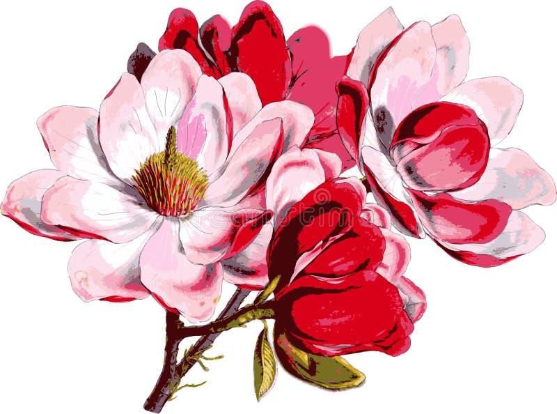 άνοιξη λουλουδιών μήλων διανυσματική απεικόνιση