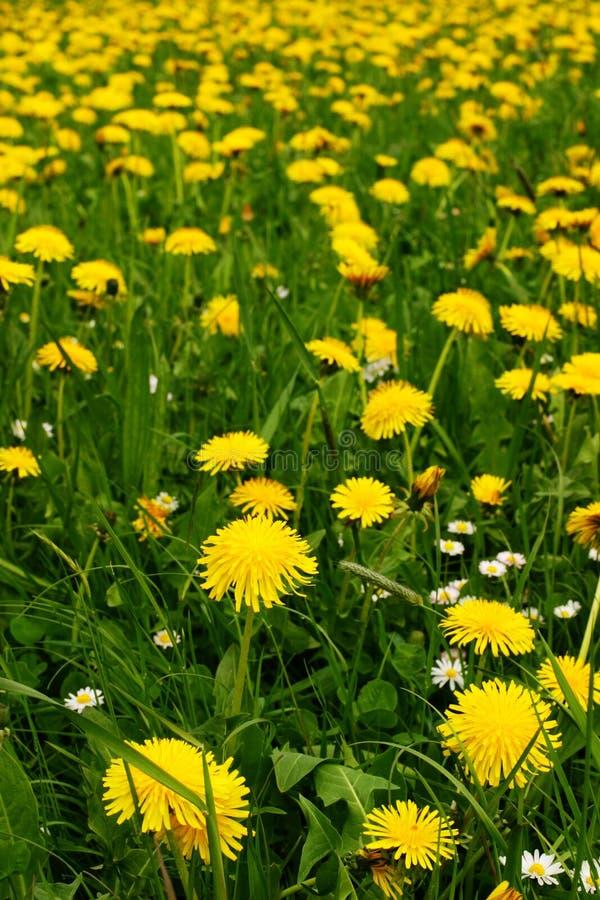 Download άνοιξη λουλουδιών στοκ εικόνες. εικόνα από χρώμα, εποχή - 386002