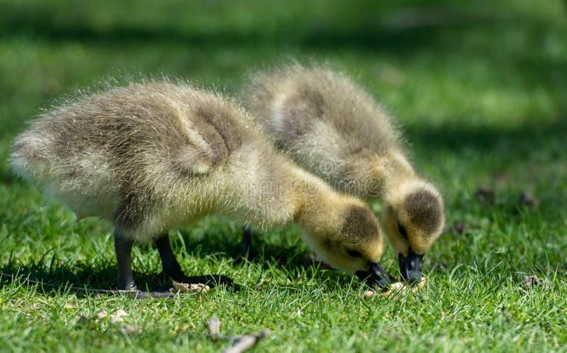 Άνοιξη νεοσσών στη φύση στοκ φωτογραφία με δικαίωμα ελεύθερης χρήσης