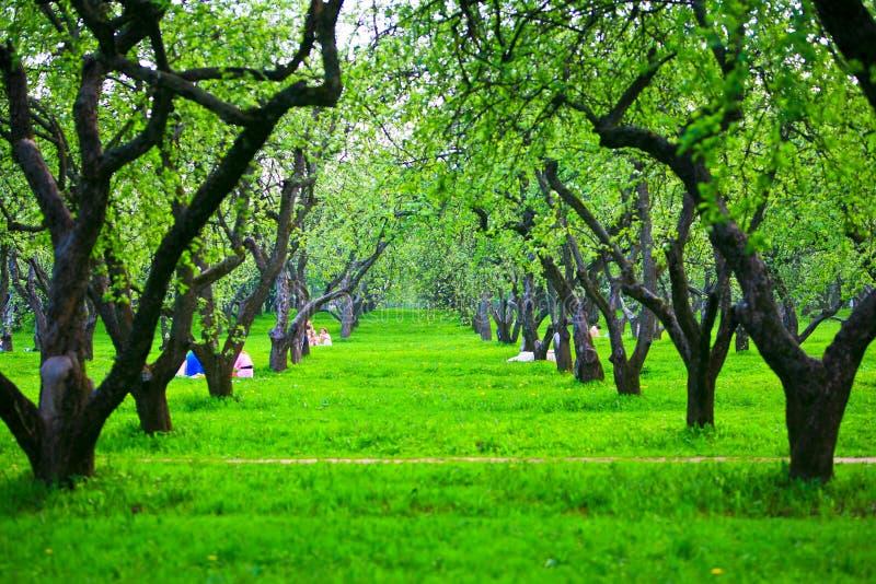 άνοιξη οπωρώνων μήλων στοκ εικόνες