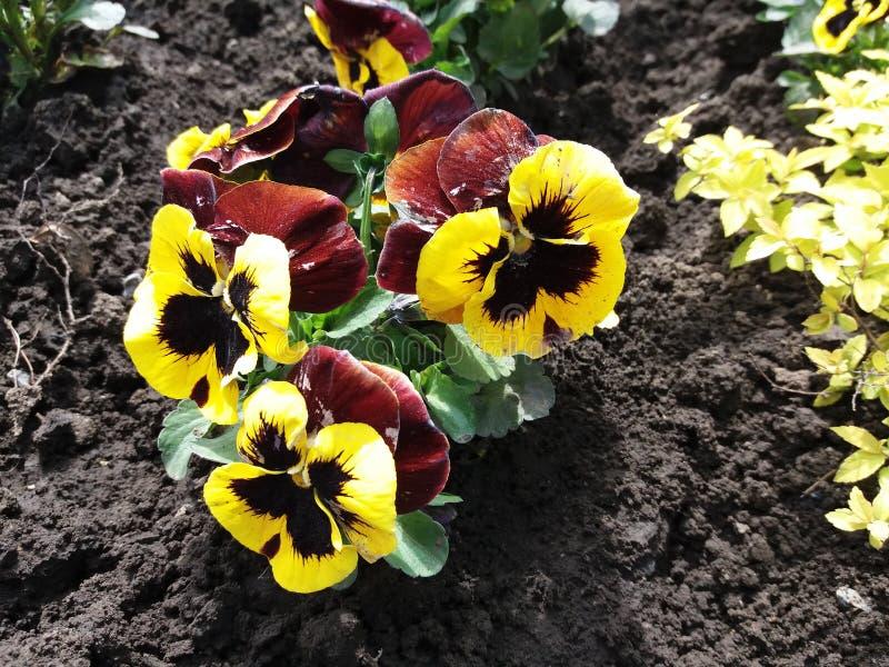 Άνοιξη λουλουδιών φυσική στοκ εικόνες