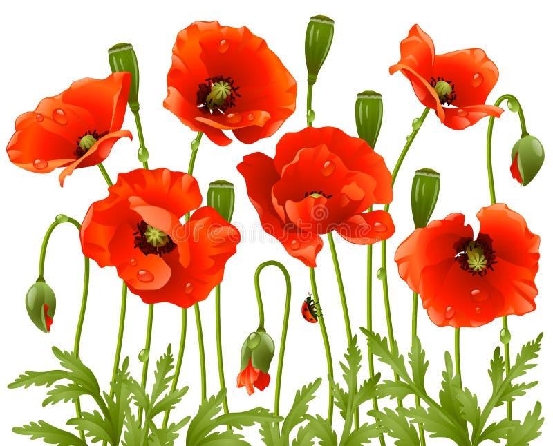 άνοιξη παπαρουνών λουλο&u διανυσματική απεικόνιση