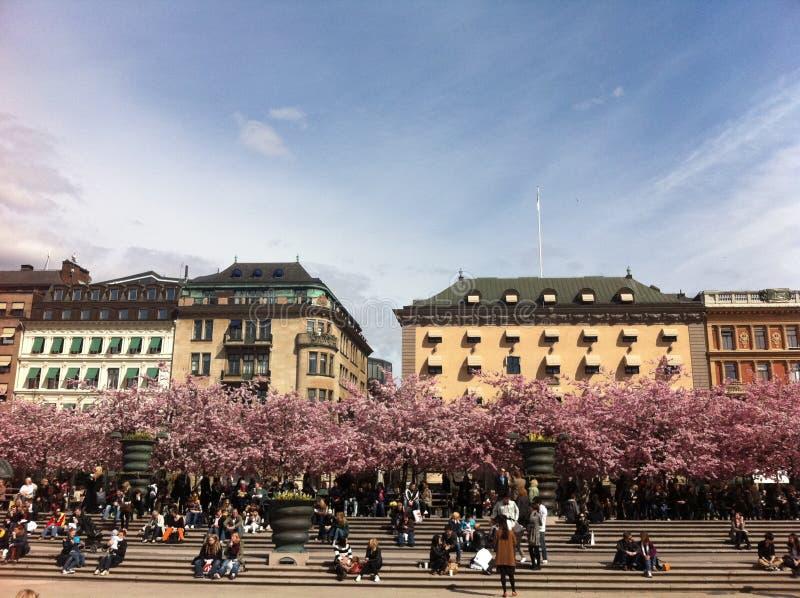 Άνοιξη στη Στοκχόλμη στοκ εικόνα με δικαίωμα ελεύθερης χρήσης