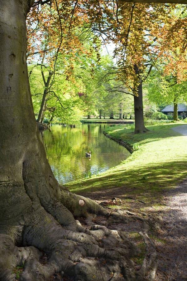 Άνοιξη στο πάρκο Δωρεάν Στοκ Εικόνα