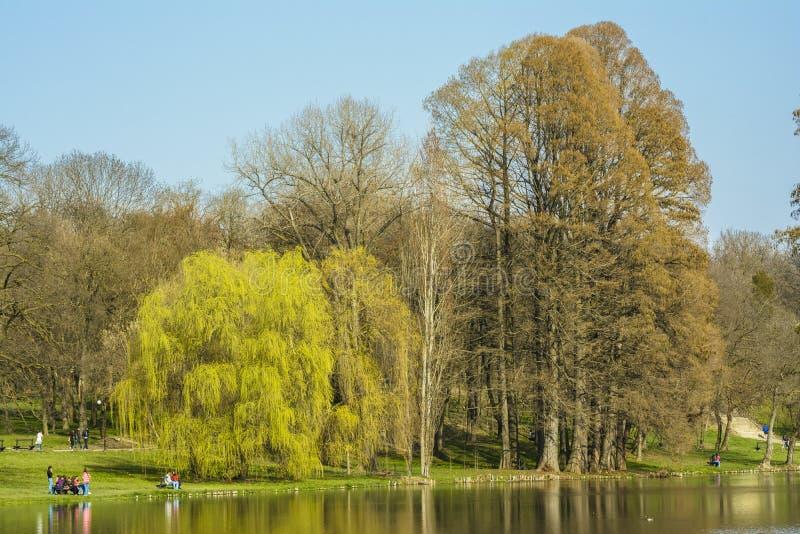 Άνοιξη στο πάρκο στοκ εικόνες με δικαίωμα ελεύθερης χρήσης