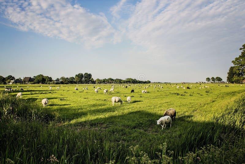 άνοιξη της Ολλανδίας στοκ φωτογραφία με δικαίωμα ελεύθερης χρήσης