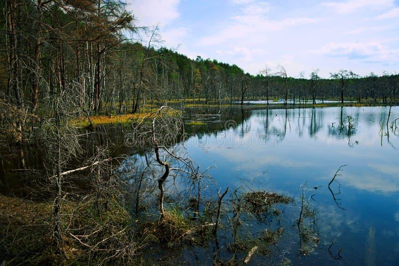 Άνοιξη, υγρότοπος, λίμνη και δάσος, τοπίο στοκ εικόνες