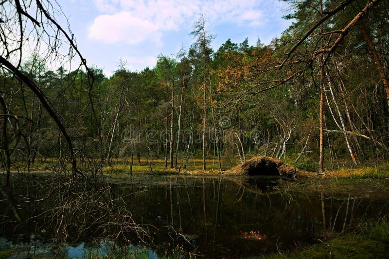 Άνοιξη, υγρότοπος, λίμνη και δασικά, δέντρα, τοπίο στοκ φωτογραφία με δικαίωμα ελεύθερης χρήσης