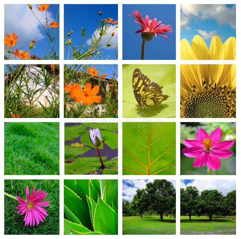 άνοιξη φύσης κολάζ στοκ εικόνα με δικαίωμα ελεύθερης χρήσης