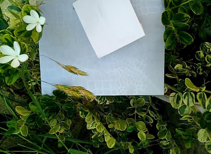 Άνοιξη Φύλλα και σύνορα λουλουδιών στοκ φωτογραφία