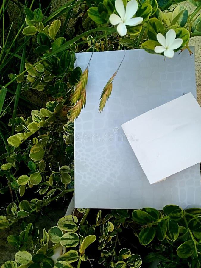 Άνοιξη Φύλλα και σύνορα λουλουδιών στοκ φωτογραφία με δικαίωμα ελεύθερης χρήσης