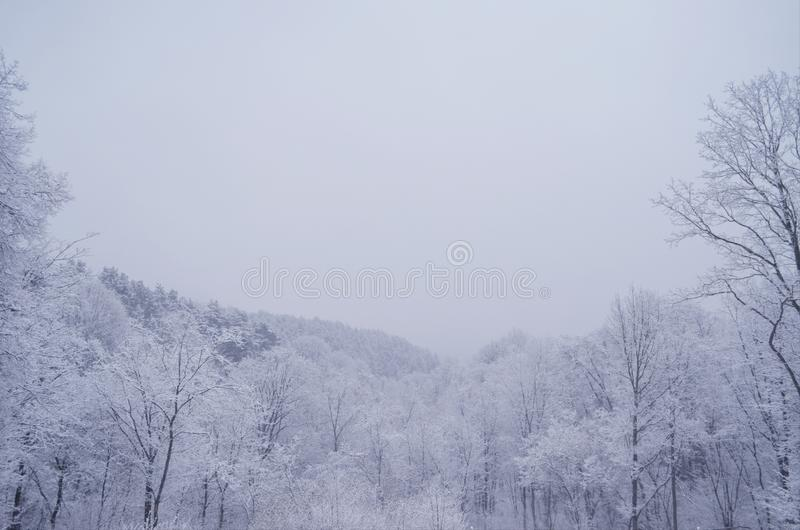 άνοιξη χιονιού στοκ φωτογραφία με δικαίωμα ελεύθερης χρήσης