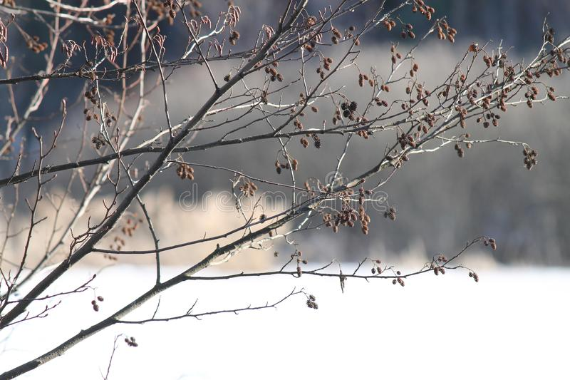 Άνοιξη, χιόνι, λειωμένα μέταλλα χιονιού, ήλιος, χλόη στοκ φωτογραφίες
