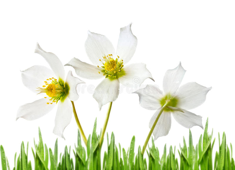 Download άνοιξη χλόης λουλουδιών στοκ εικόνα. εικόνα από χορτοτάπητας - 22776245