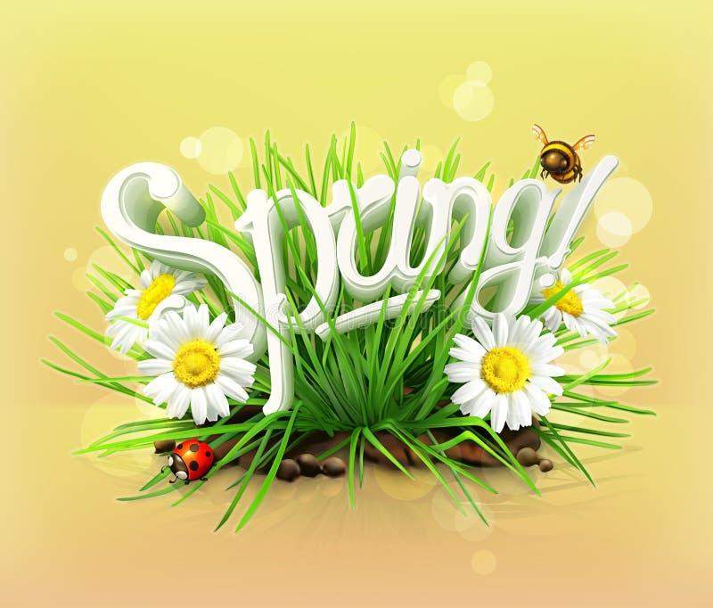 Άνοιξη, χλόη, λουλούδια camomile και ladybug διανυσματική απεικόνιση
