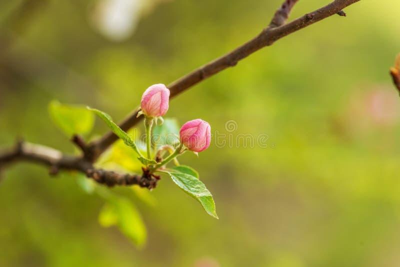 Άνοιξη Όμορφο άνθος δέντρο στοκ εικόνα με δικαίωμα ελεύθερης χρήσης