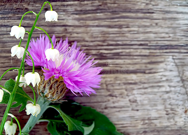 Άνοιξη - cornflower και κρίνος της κοιλάδας στοκ φωτογραφία με δικαίωμα ελεύθερης χρήσης