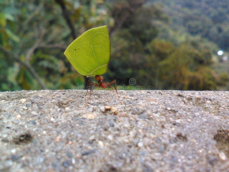 Άπειρο μυρμήγκι στοκ εικόνα με δικαίωμα ελεύθερης χρήσης