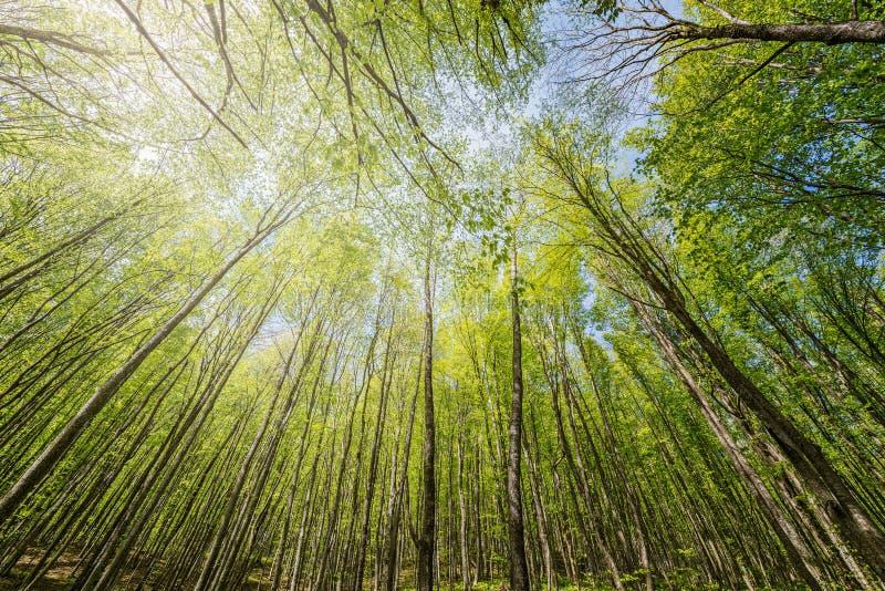 Άποψη άνοιξη των δέντρων στο βαθύ δάσος βουνών στοκ φωτογραφίες