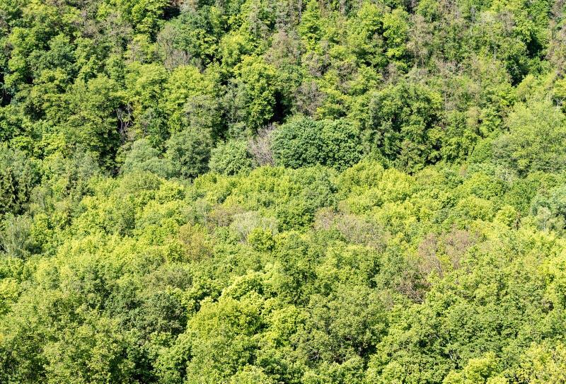 Άποψη άνωθεν σχετικά με τη σύσταση του δάσους άνοιξη στοκ εικόνα με δικαίωμα ελεύθερης χρήσης