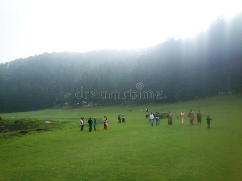 Άποψη δέντρων πεύκων βραδιού Kajjiar στοκ εικόνα