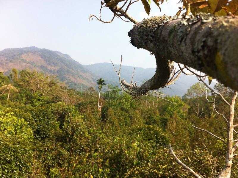 Άποψη από την κορυφή των φρούτων στοκ φωτογραφία με δικαίωμα ελεύθερης χρήσης