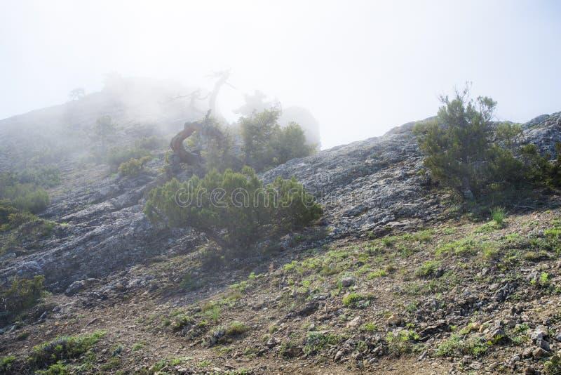 Άποψη από τη δύσκολη κορυφή του βουνού επάνω από τα σύννεφα στοκ εικόνα με δικαίωμα ελεύθερης χρήσης