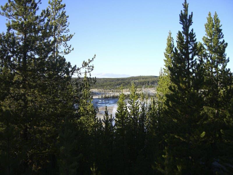 άποψη από το δάσος σε μια λίμνη στοκ φωτογραφίες