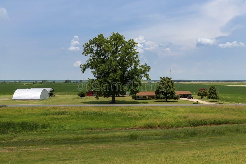 Άποψη ενός αγροκτήματος σε έναν αγροτικό τομέα του κράτους του Μισισιπή, κοντά στο ποτάμι Μισισιπή στοκ φωτογραφία με δικαίωμα ελεύθερης χρήσης