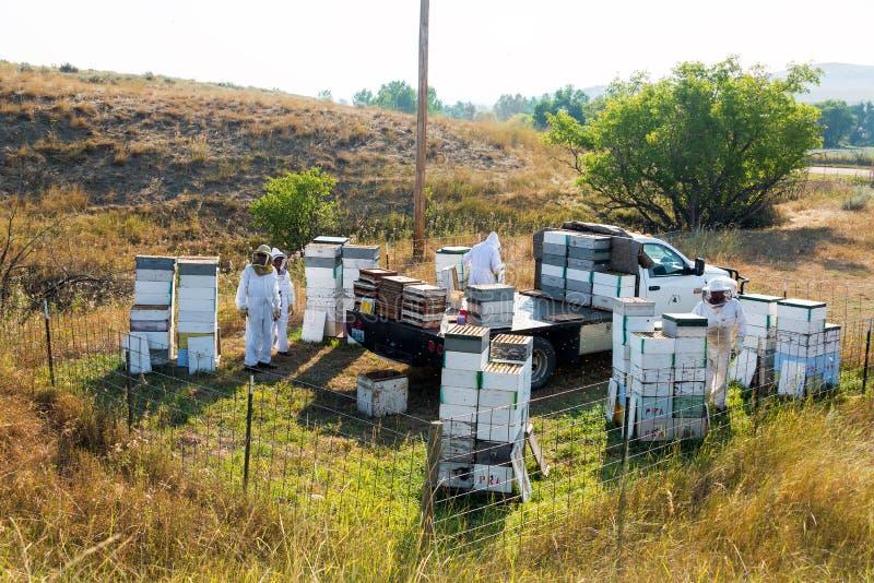 Άποψη ενός ναυπηγείου μελισσών στοκ φωτογραφίες με δικαίωμα ελεύθερης χρήσης