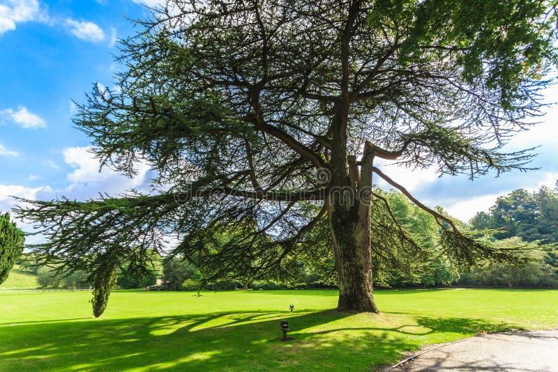 Άποψη επαρχίας του πράσινου τομέα το μήλο καλύπτει το δέντρο ήλιων φύσης λιβαδιών τοπίων λουλουδιών στοκ φωτογραφία με δικαίωμα ελεύθερης χρήσης
