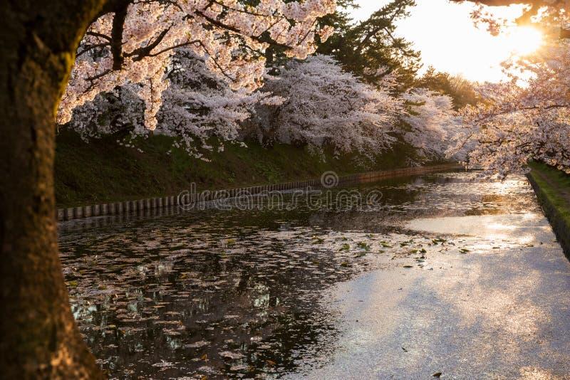 Άποψη ηλιοβασιλέματος με το άνθος κερασιών στοκ φωτογραφία με δικαίωμα ελεύθερης χρήσης