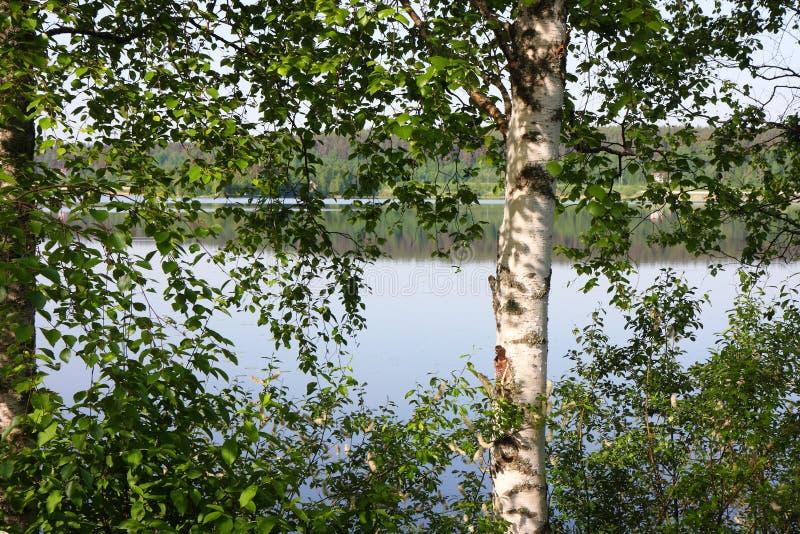 Άποψη λιμνών στο θερινό χρόνο στοκ εικόνες